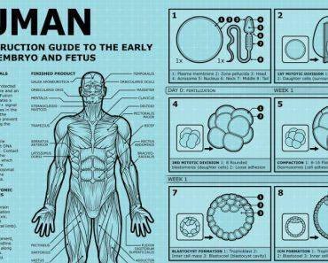 LEUK - Hoe bouw je een mens? 4