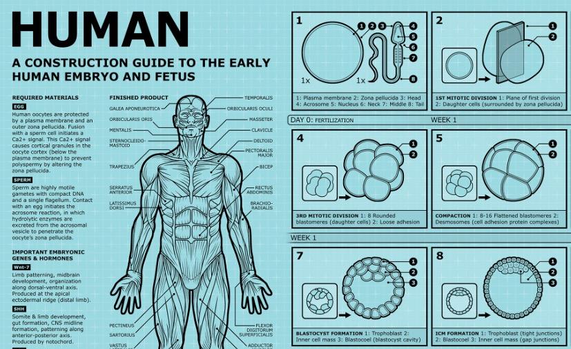 LEUK - Hoe bouw je een mens? 1